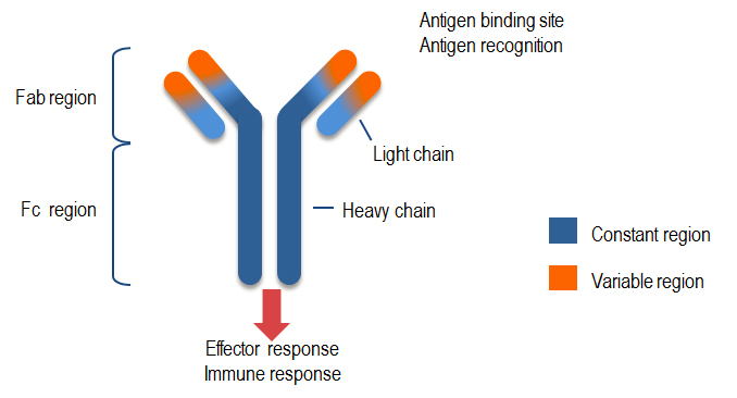 a reference technology  monoclonal antibodies